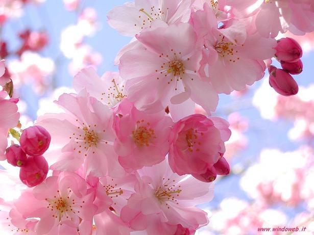 Flores lindas da nossa vida