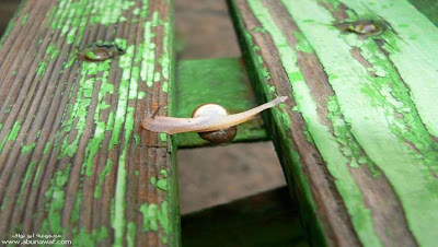 Brave, Smart, Snail