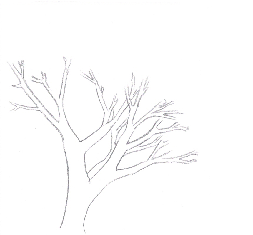 How to Draw a Tree - Draw Central