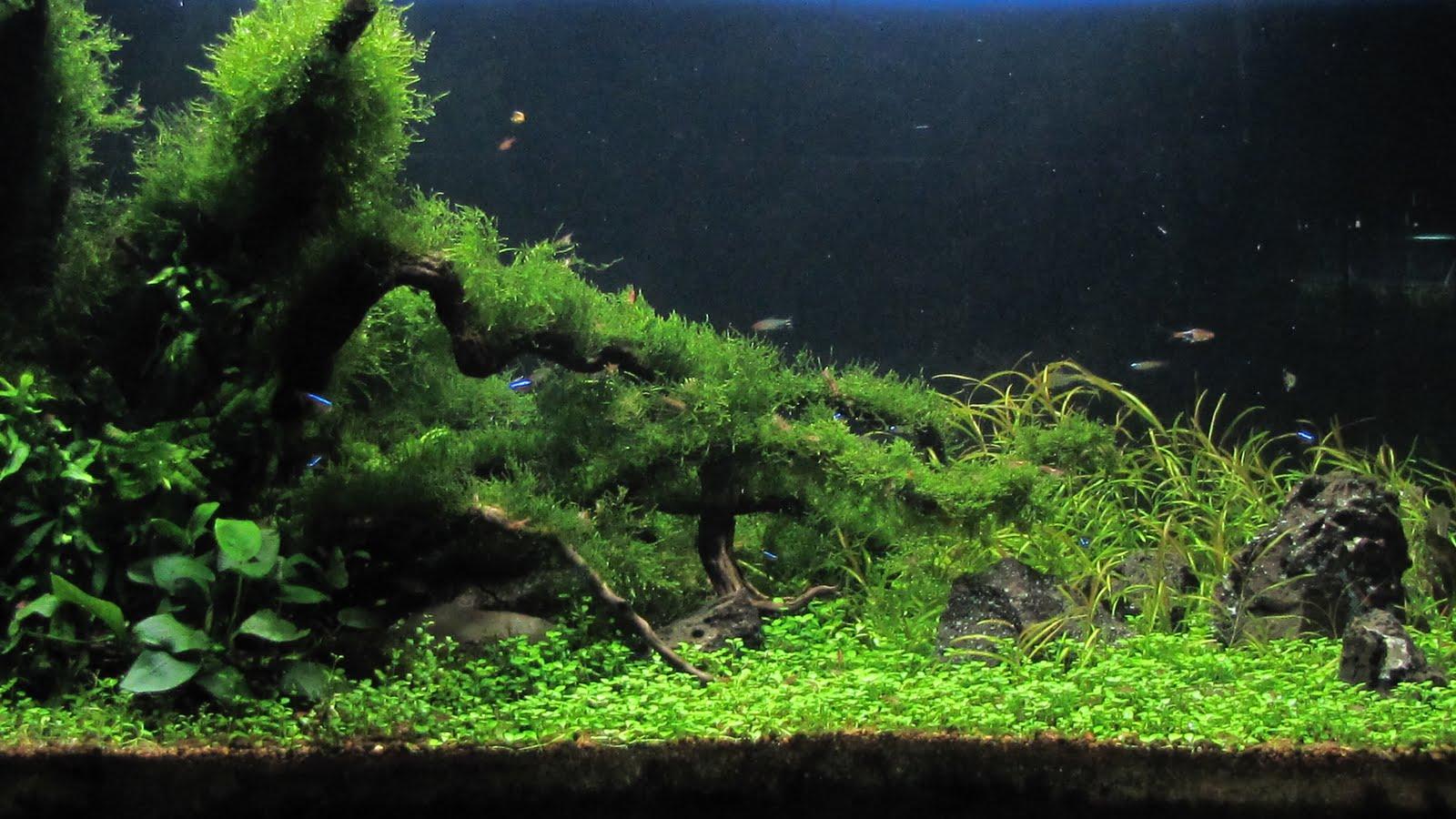 AFFABLE AQUARIUM: my aquascapes