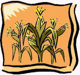 El maíz es un alimento básico en la cocina venezolana, desde la época precolombina.