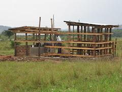 Cow Banda in Nyamhongoro
