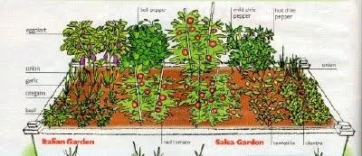 living happy healthy  grow   salsa garden