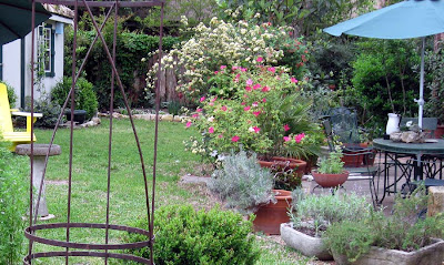 Annieianaustin, patio with mutabilis