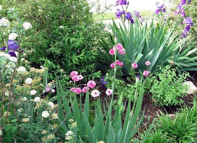 annieinaustin, purple iris & pink ranunculus