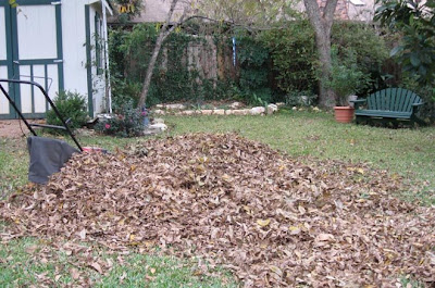 Leaves to mulch,annieinaustin