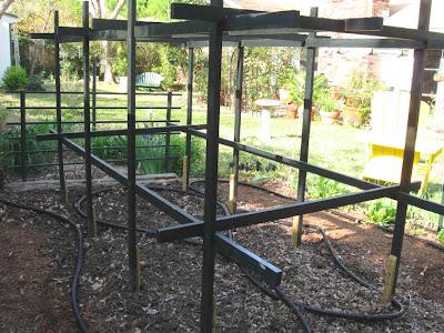Tomato scaffold,annieinaustin