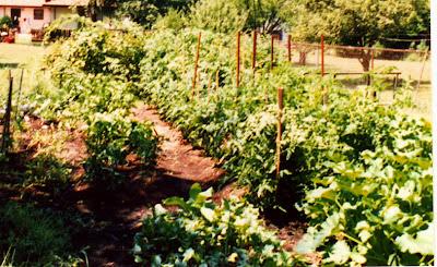 1991 veggie garden, annieinaustin