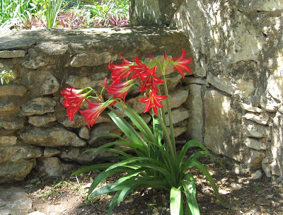 Annieinaustin, red lilies, mayfield park