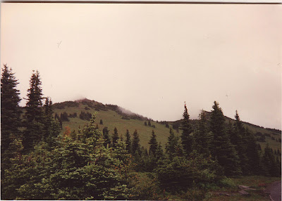 Annieinaustin, Mt Rainier meadow 1990's