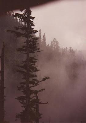 Annieinaustin Olympic National Park tree