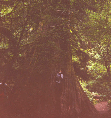 Annieinaustin, Olympic temperate rainforest