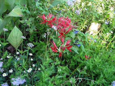 Annieinaustin, Lycoris in butterfly garden