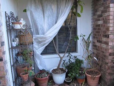 Annieinaustin,2011,02,plants covered