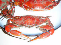 perfect Blue Claw Crab from the Great South Bay