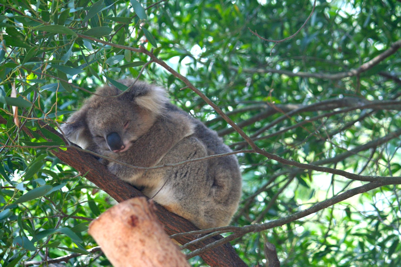 Discovering Melbourne: Healesville Sanctuary