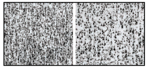 BA10 Fantasmi Tra Neuroni