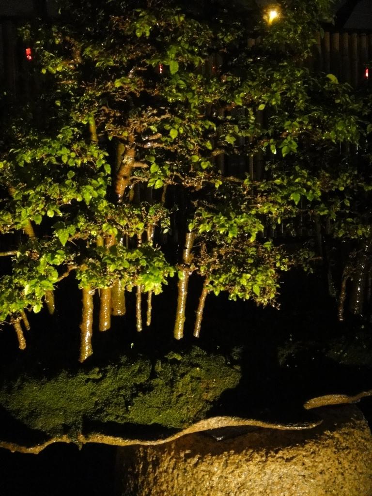 wet bonsai