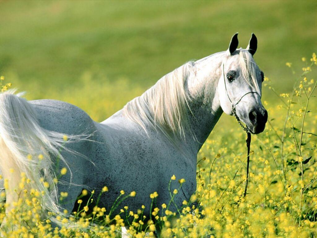Mis-lindos-caballos