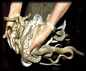 pin king cobra extinct species titanoboa future super