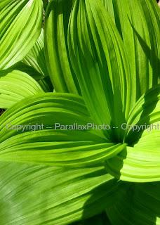 macro vibrant green leaf
