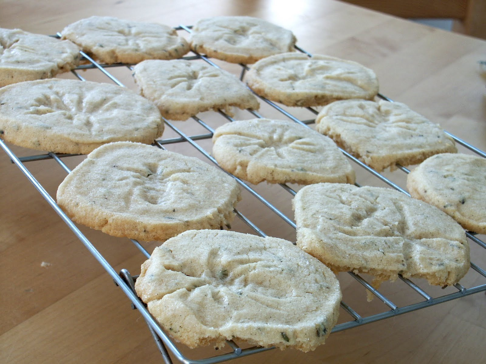 cookies recipe martha stewart fossil cookies mrfood com fossil cookies ...