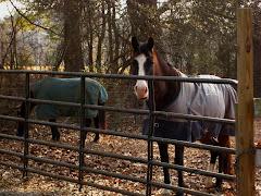 Milton Georgia Horse Farm