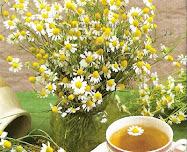 Amo Chá de Camomila