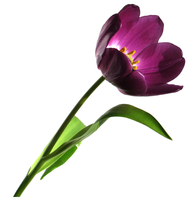 flower clip art png. png graphics