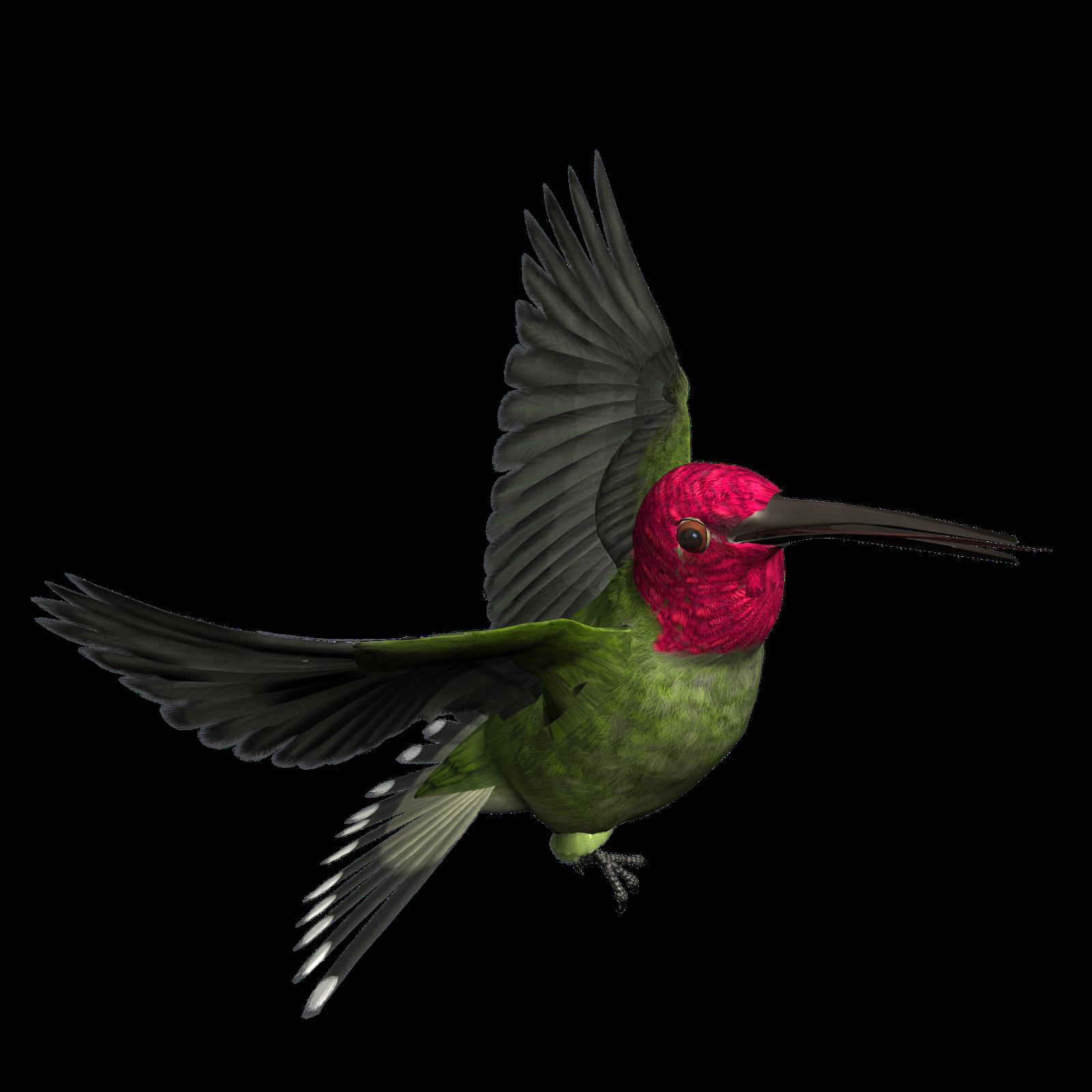 bird png graphics