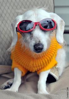 anjing tertua di dunia