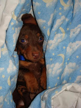 Our little wiener