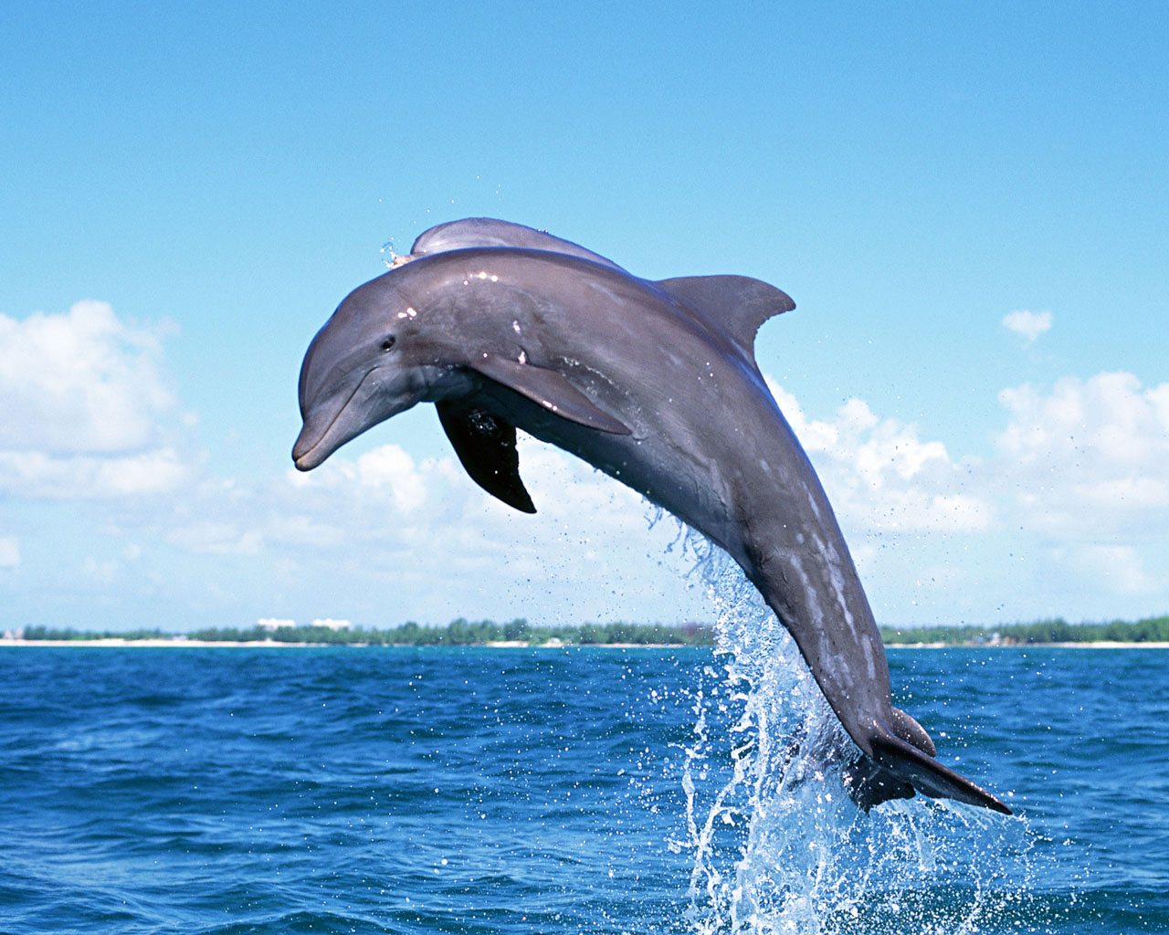 Dolphin Dolphin Dolphin | Encyclopedia of World Photo Vacuum Coloring Pages