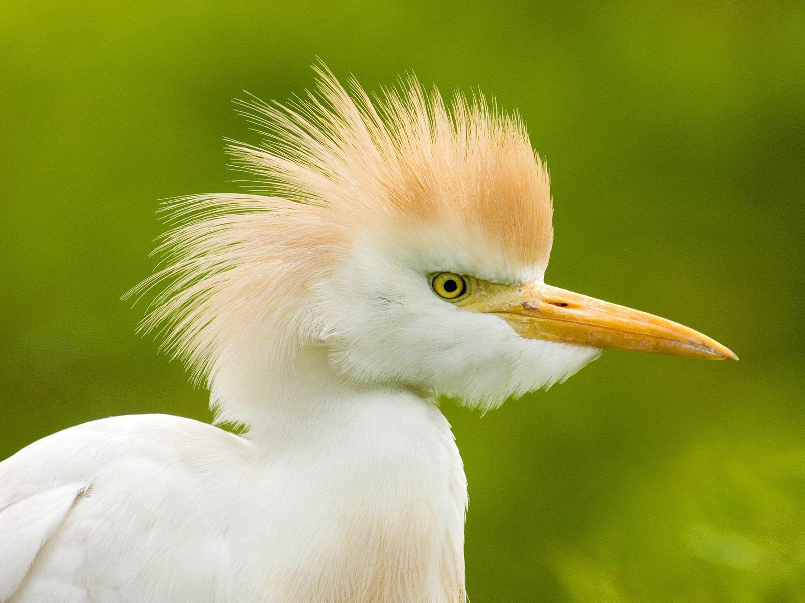 Bird bird bird bird