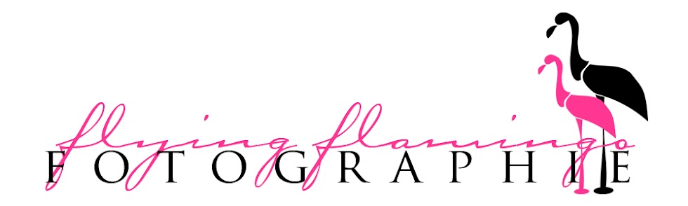 Flying Flamingo Fotographie