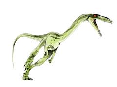 Coelophisis