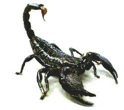 Outlook To My Spiritual Realms: My Scorpion Dream