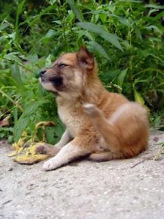 proteinforgiftning hund