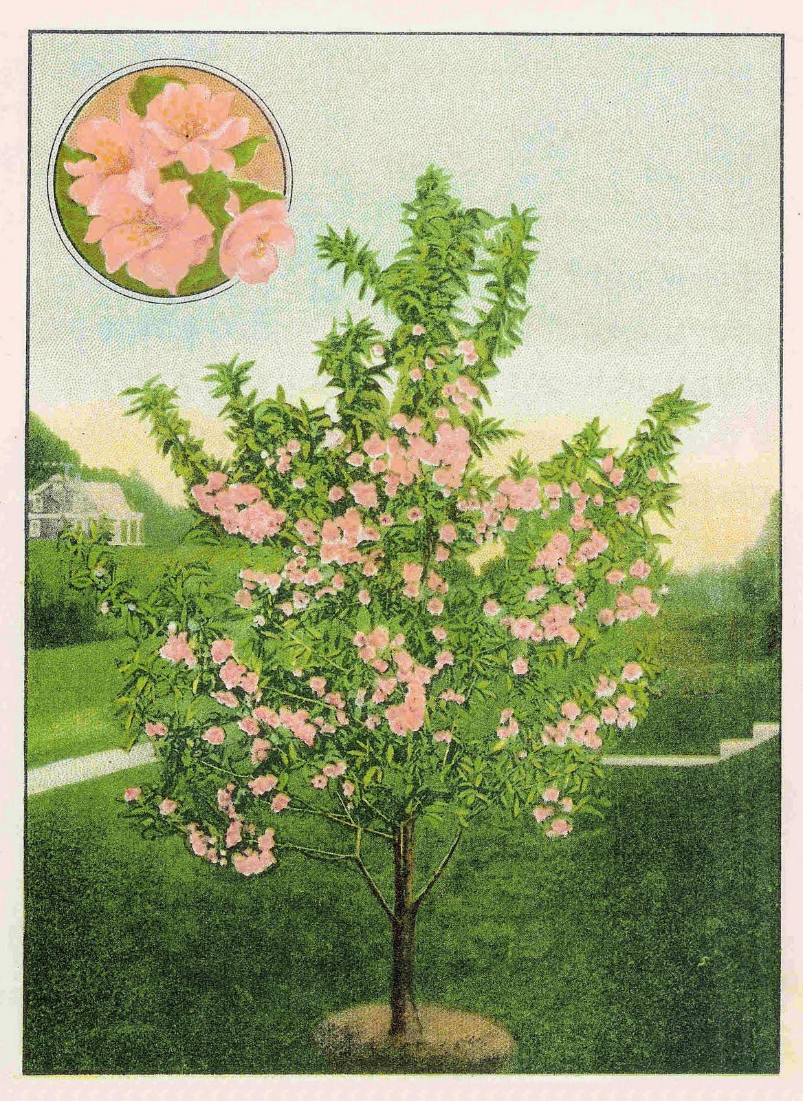 flowering tree clipart - photo #42