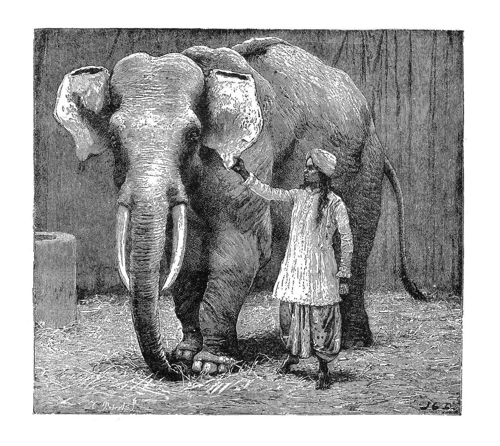 vintage elephant clip art - photo #27