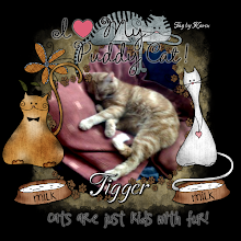 my cat Tigger