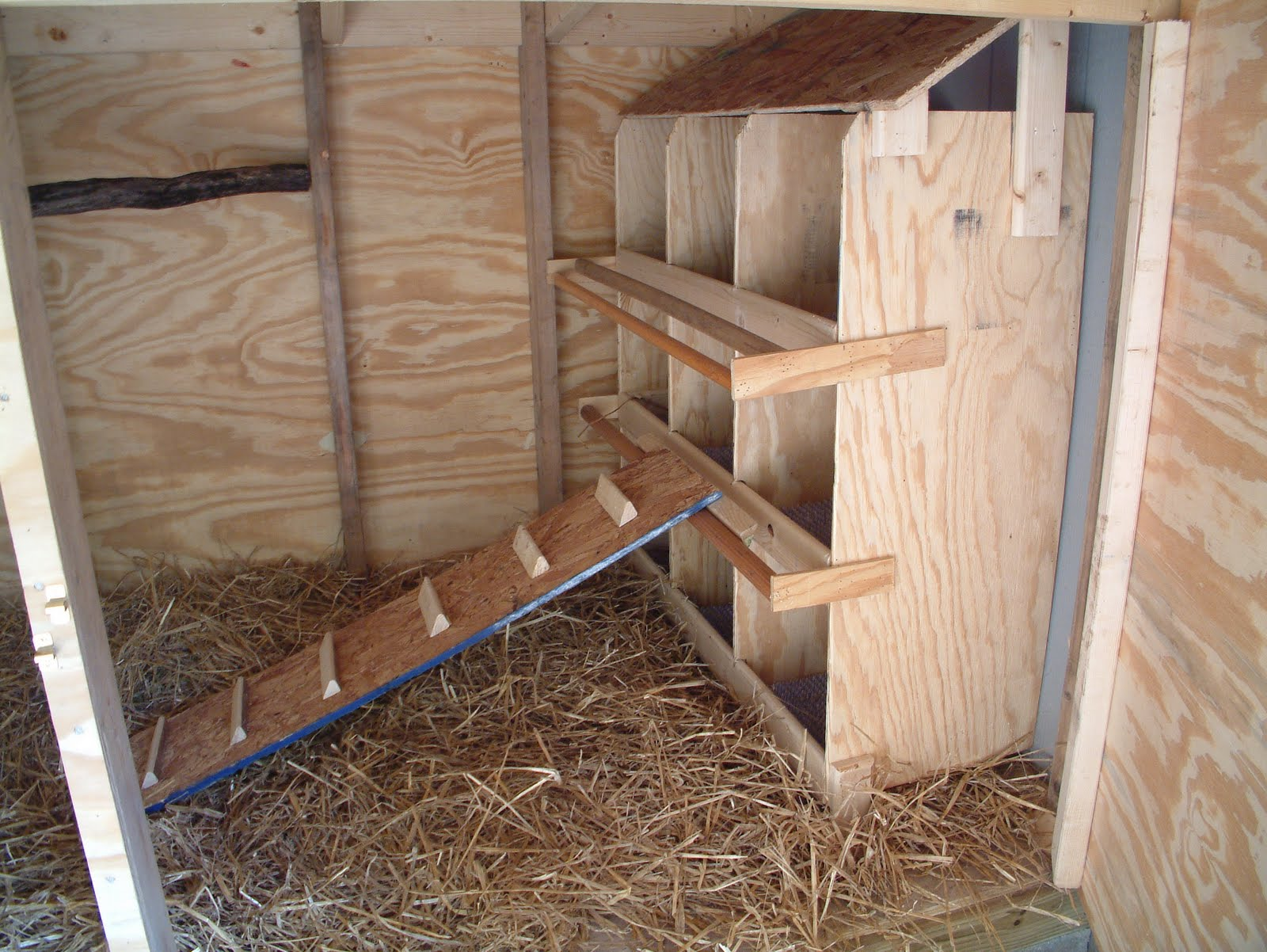 Chicken coop inside layout - photo#28
