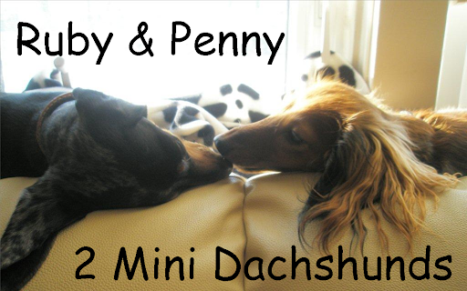Ruby and Penny - 2 Mini Dachshunds