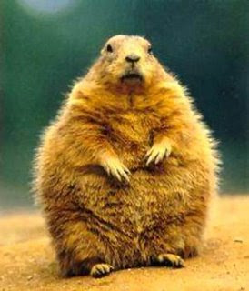 Just because my birthday fell on Ground Hogs day, how did that mean I was destined to look like one? 