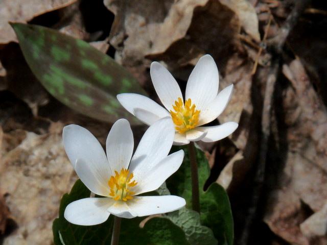 Close-up View of Three Extraordinarily Small Wildflowers