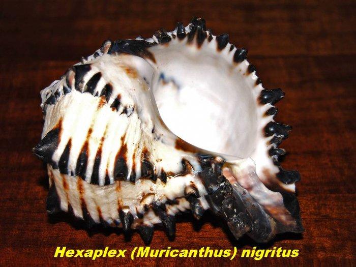 sea-shells-14.jpg