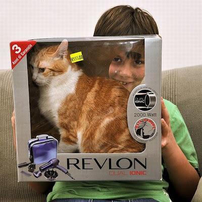 keep cat indoors