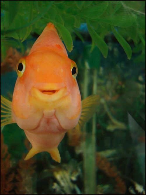Fishes with human like expressions on the faces: 30