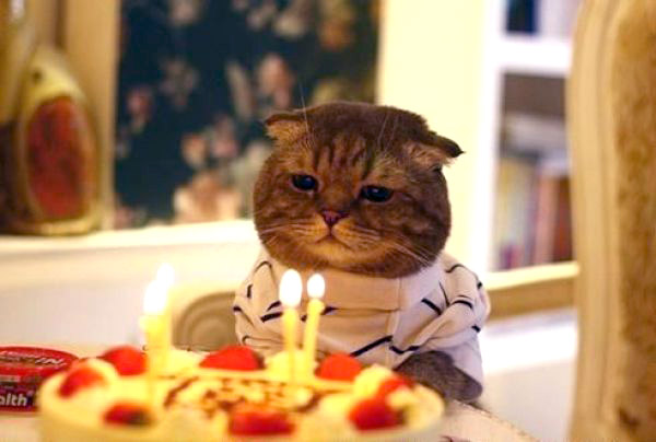 cat-happy-birthday-01.jpg