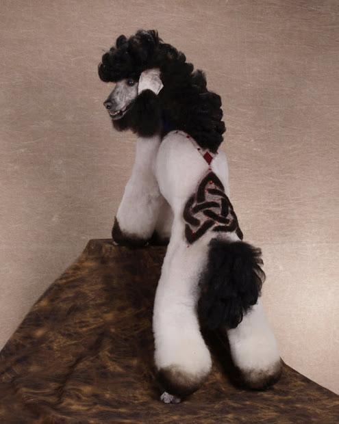 funny unique poodle haircuts